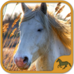 Horse Puzzles Collection (Mod) 5.34.034