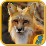 Wild Animals Puzzle Games: WildLife America (Mod) 5.55.001