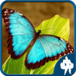 Butterfly Jigsaw Puzzles (Mod) 1.9.0