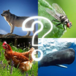 🐷 Zoo sounds quiz 🐷 (Mod) 4.8
