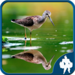 Reflection Jigsaw Puzzles (Mod) 1.9.18